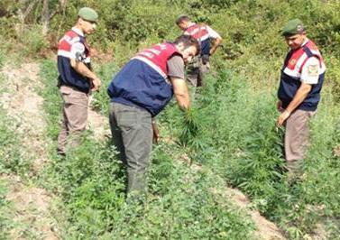 Ev ve bahçesinde çok sayıda uyuşturucu madde ele geçirildi