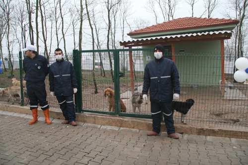 Barınakta günde 20 hayvan tedavi ediliyor
