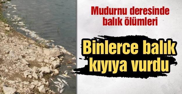 Mudurnu deresinde balık ölümleri