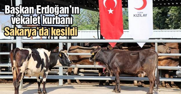 Başkan Erdoğan'ın vekalet kurbanı Sakarya'da kesildi