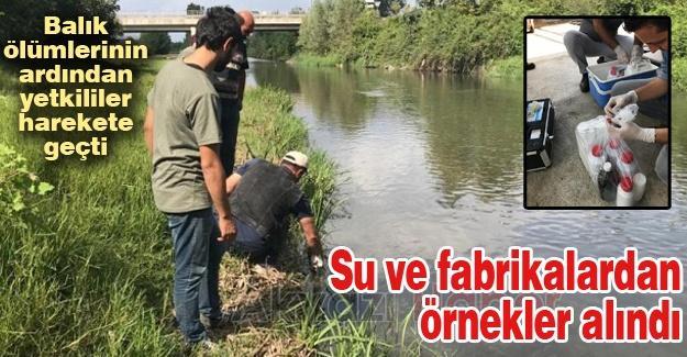 Balık ölümlerinin ardından yetkililer harekete geçti