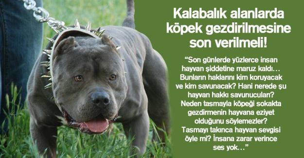 Kalabalık alanlarda köpek gezdirilmesine son verilmeli!