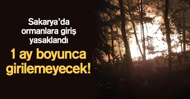 Sakarya'da ormanlara giriş yasaklandı