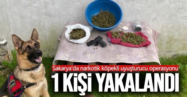 Sakarya'da narkotik köpekli uyuşturucu operasyonu