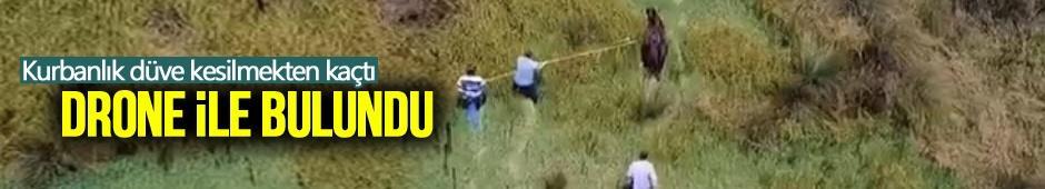 Kesilmekten kaçan düve drone ile bulundu