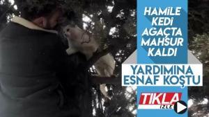 Ağaçta mahsur kalan kedinin yardımına esnaf yetişti