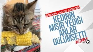 Kedinin mısır yediği anlar gülümsetti