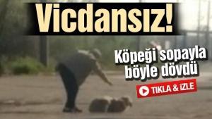 Vicdansız adam köpeği sopayla böyle dövdü