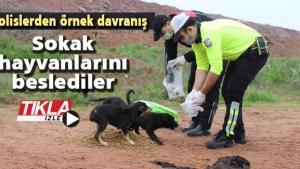 Polislerden örnek davranış! Sokak hayvanlarını beslediler