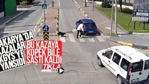 Köpek bile kaza karşısında şaşırdı kaldı
